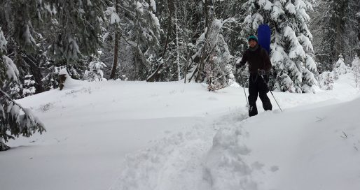 Schneeschuhwandern im Schwarzwald