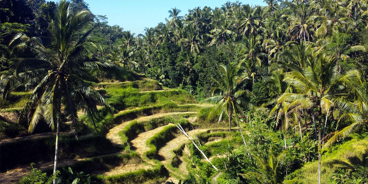 Tagestrip zu den weltberühmten Reisterrassen von Tegallalang
