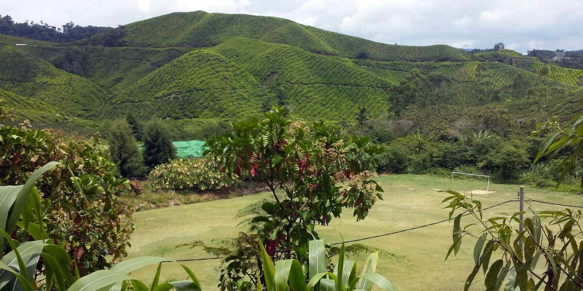 """Die Cameron Highlands und ihre Teeplantagen, einfach """"Ummph!"""""""