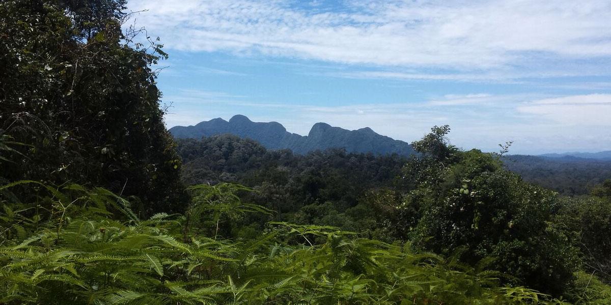 Nationalpark Taman Negara