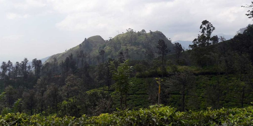 little-adams-peak