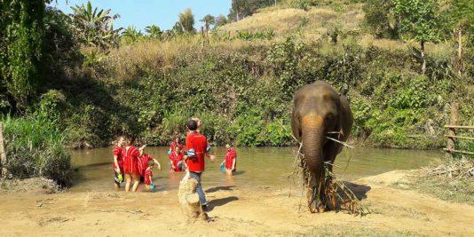 elefantencamps-in-thailand